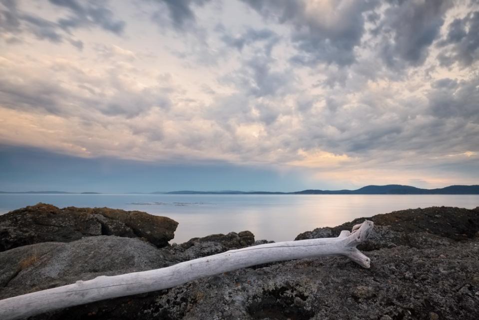 driftwood, Pender Island B.C.